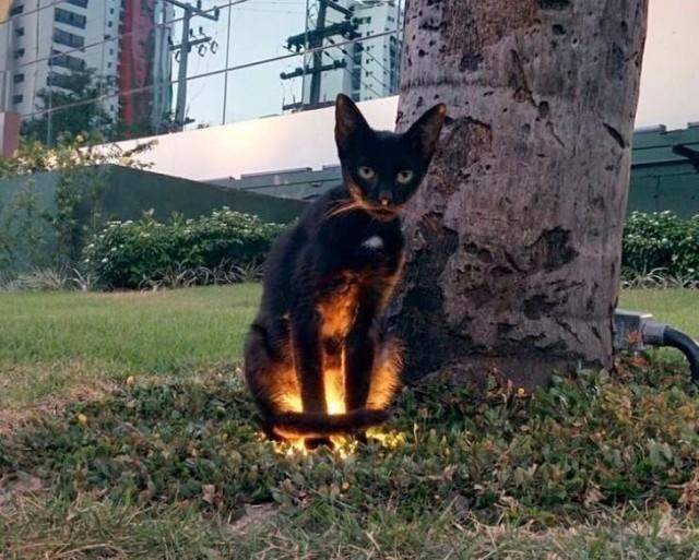 魔界転生しまくり猫ズ