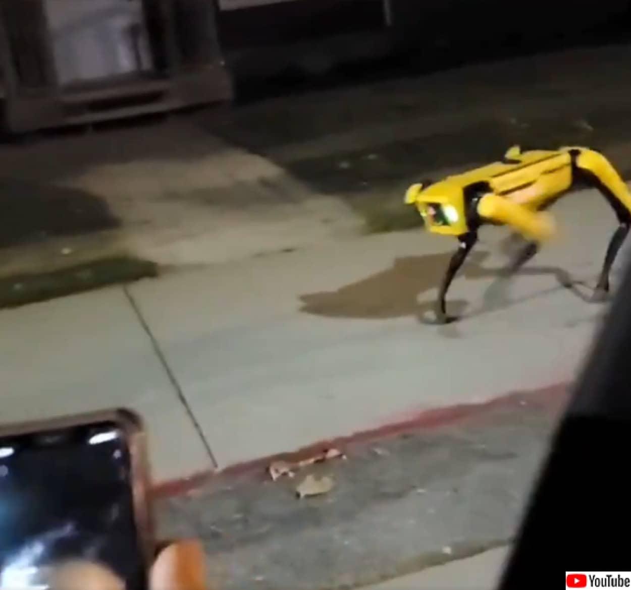 犬型ロボット「spot」にばったり遭遇