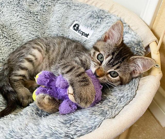 生まれつき体の弱かった子猫、ぬいぐるみの親友に出会い健康状態がぐんぐん回復