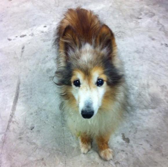 これまでの生活がガラリと変わった。職場にふらっと迷い込んだ犬が与えてくれたもの。