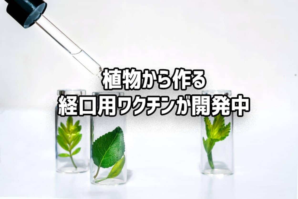 植物細胞を培養した経口用ワクチンの開発no title