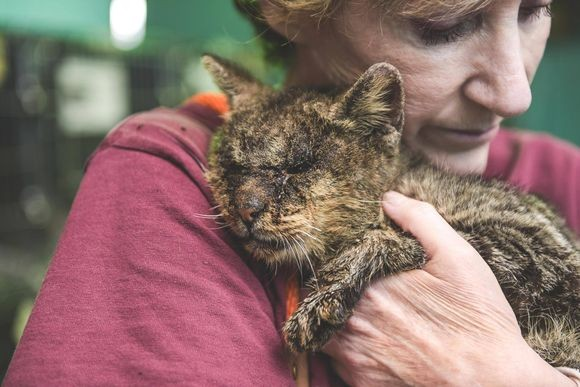 ひどい感染症で誰も触ろうとしなかった子猫。保護されて1年後、今ではこんな立派な猫に(アメリカ)