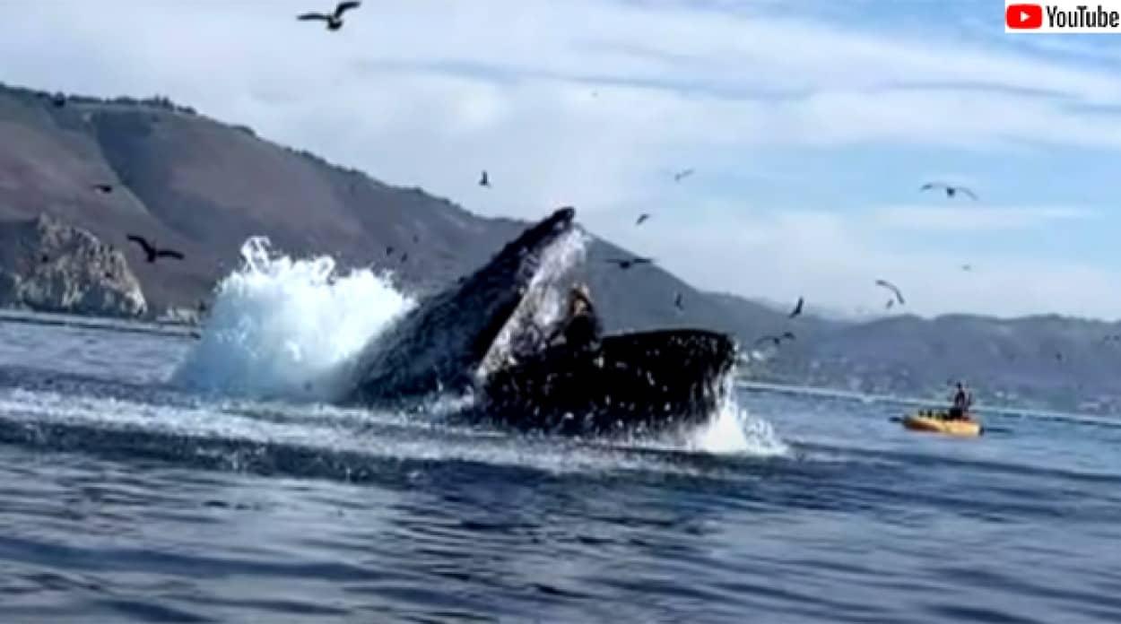 クジラに飲み込まれそうになったカヤック