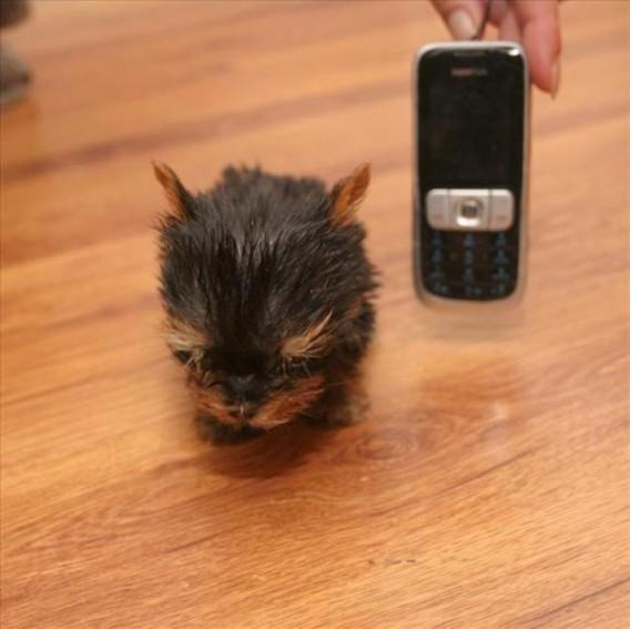 小さい 一 犬 番