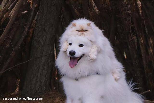 不機嫌顔の猫と笑顔満面の犬のナイスコンビ。白い2匹が溶けて交じり合うハッピーライフ