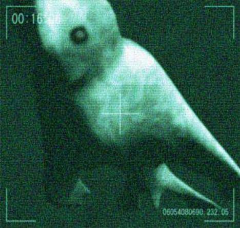 antarctic_humanoid_2