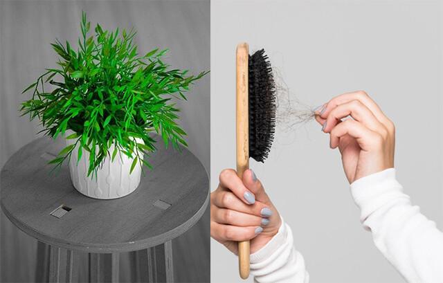 抜け毛を土に埋めることで植物がぐんぐん育つ