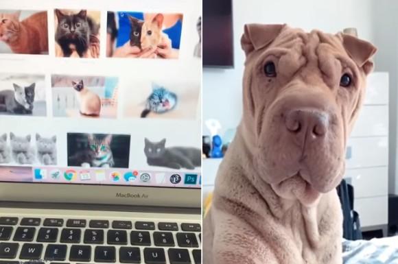 パソコンで猫画像を見ていた時の犬の反応