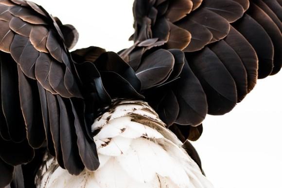 猛禽最強。ワシについての驚くべき10の事実