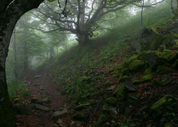 fog_08