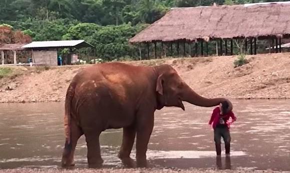 水は危険なのやから気をつけなあかんて!大好きな人間に対して超過保護になるゾウ(タイ)