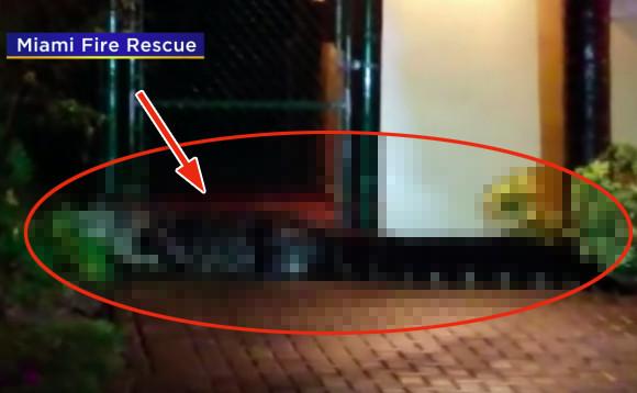 誰かが倒れている!消防隊員が助けようと思ったら巨大なワニだった件(アメリカ)