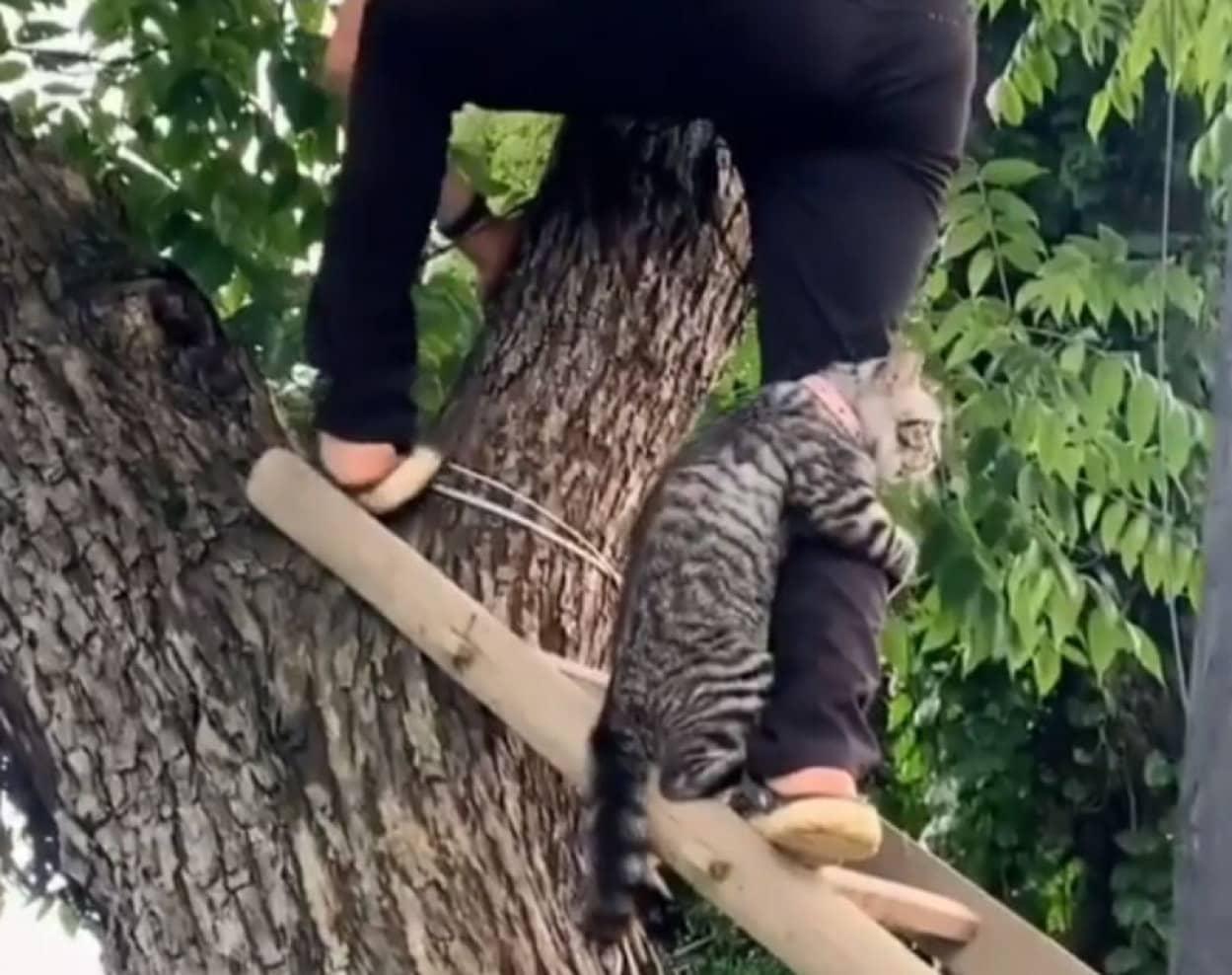 木から降りられない猫の救出