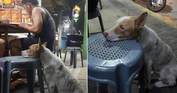 やせ細った犬が空腹に耐えきれず、屋台の椅子に顔を乗せ、人間が食べ物を分けてくれるのを待ち続ける(メキシコ)