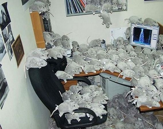 awesome_office_cube_pranks_15