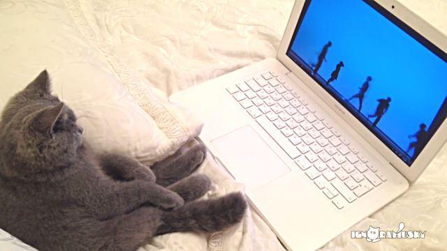 「なぜどうして?」と聞いちゃダメ!猫の猫らしい行動を総集編で見てみよう