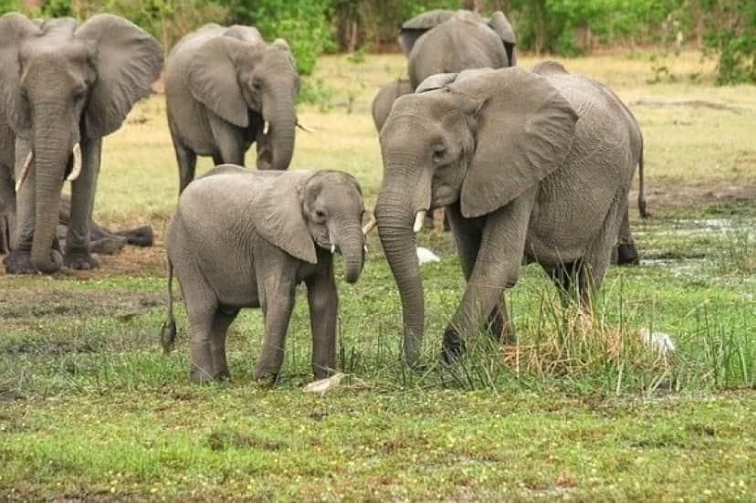 elephant-2923917_640_e