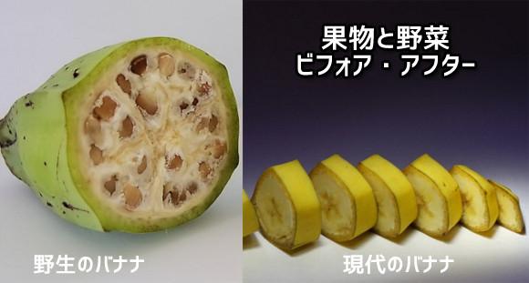 こんなに変化した!かつての果物や野菜と今のものを比較したのビフォア・アフター
