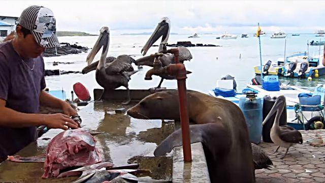 「おじさん、おじさん、お魚ちょーだい!」ガラパゴスの魚市場は優しい無法地帯だった