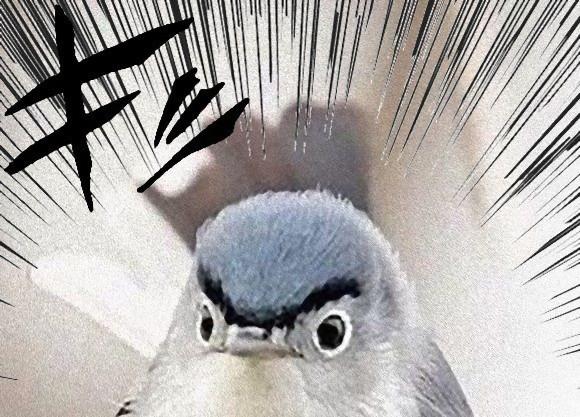 両津事案?怒ってるし眉毛つながってる、割と憎めない鳥が海外掲示板で話題に