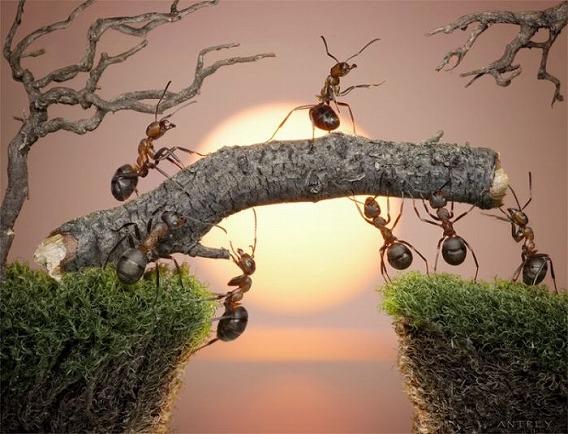 ants_26