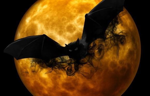 bat-988225_640_e