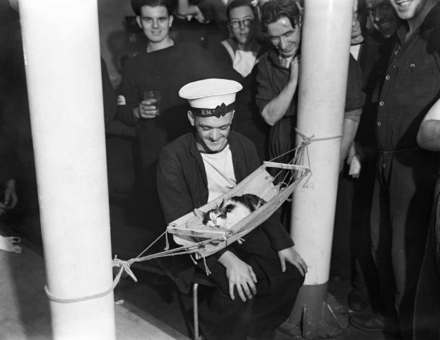 これは尊い。第二次世界大戦中、船乗り猫がハンモックでくつろぐ古写真