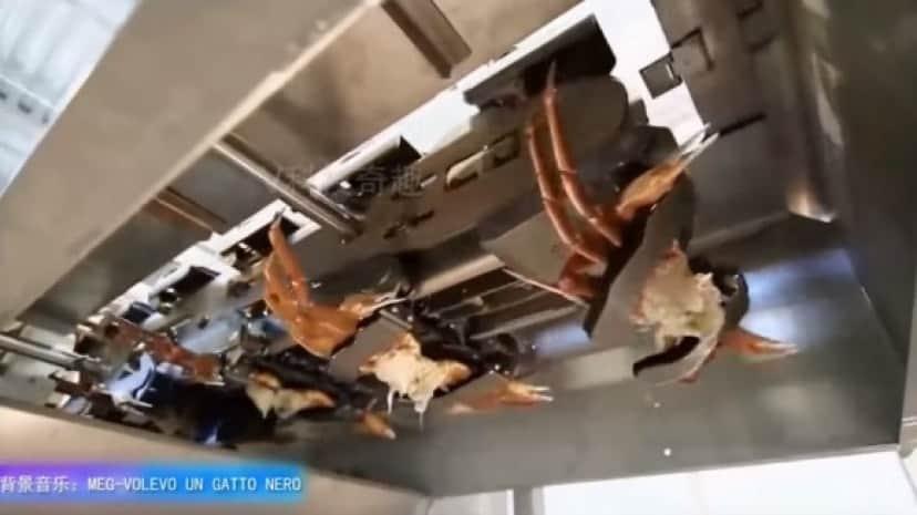crab7_e