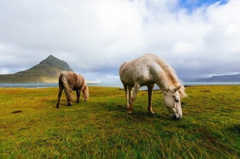 horses-1149185_640_e