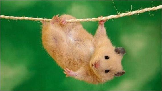 hamsters_07
