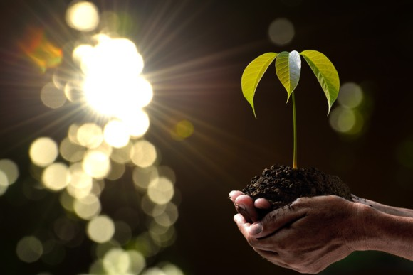 フィリピンで学校を卒業する学生全員に10本の植樹を義務化する新法が導入される