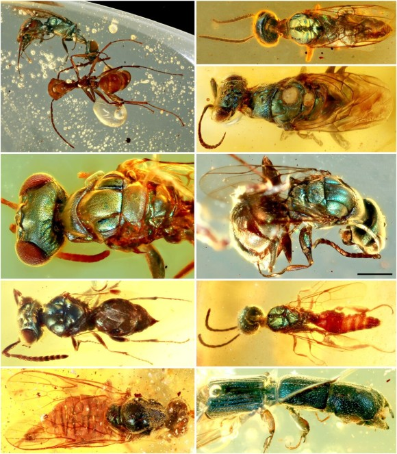 insect4_e