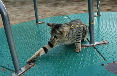 cats_25