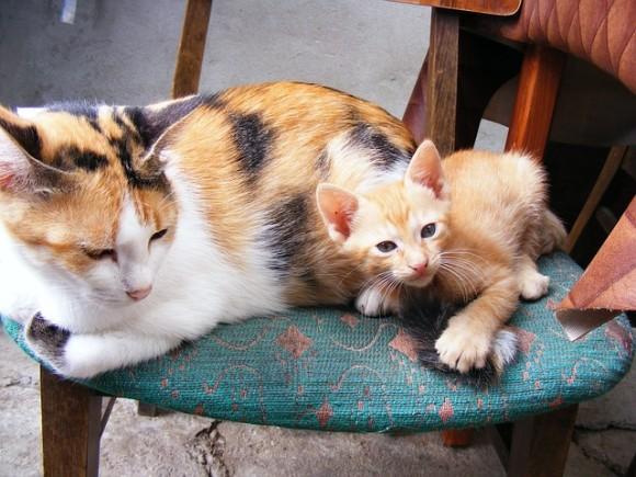 cats-87278_640_e