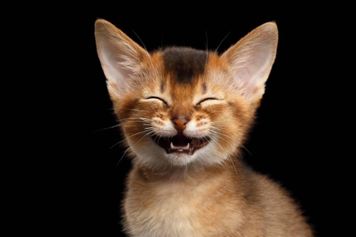 動物も笑う。それは声に現れる。少なくとも65種の動物は遊びながら笑うことが判明