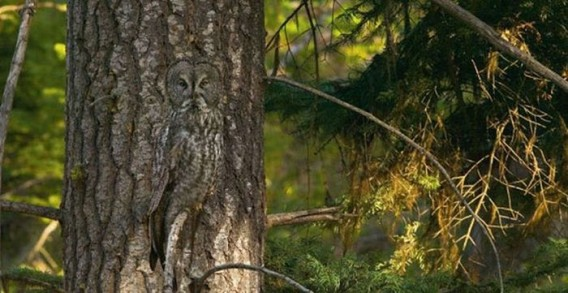 camouflaged_owls_14_e