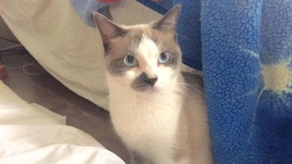 おばあさん、助けてあげて!隣人のピンチを救ったヒーロー猫(カナダ)