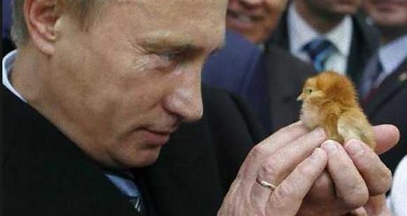 プーチンとプーチンがてなずけた動物たち、20枚の写真