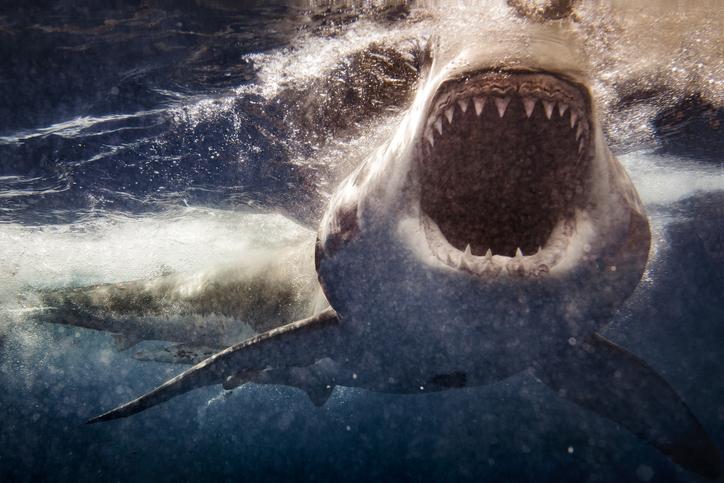 1900万年前、サメが謎の大量死を遂げていたことが判明。約90%が死滅していた