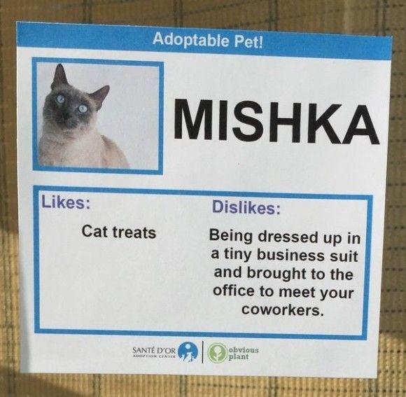 Mishka_e