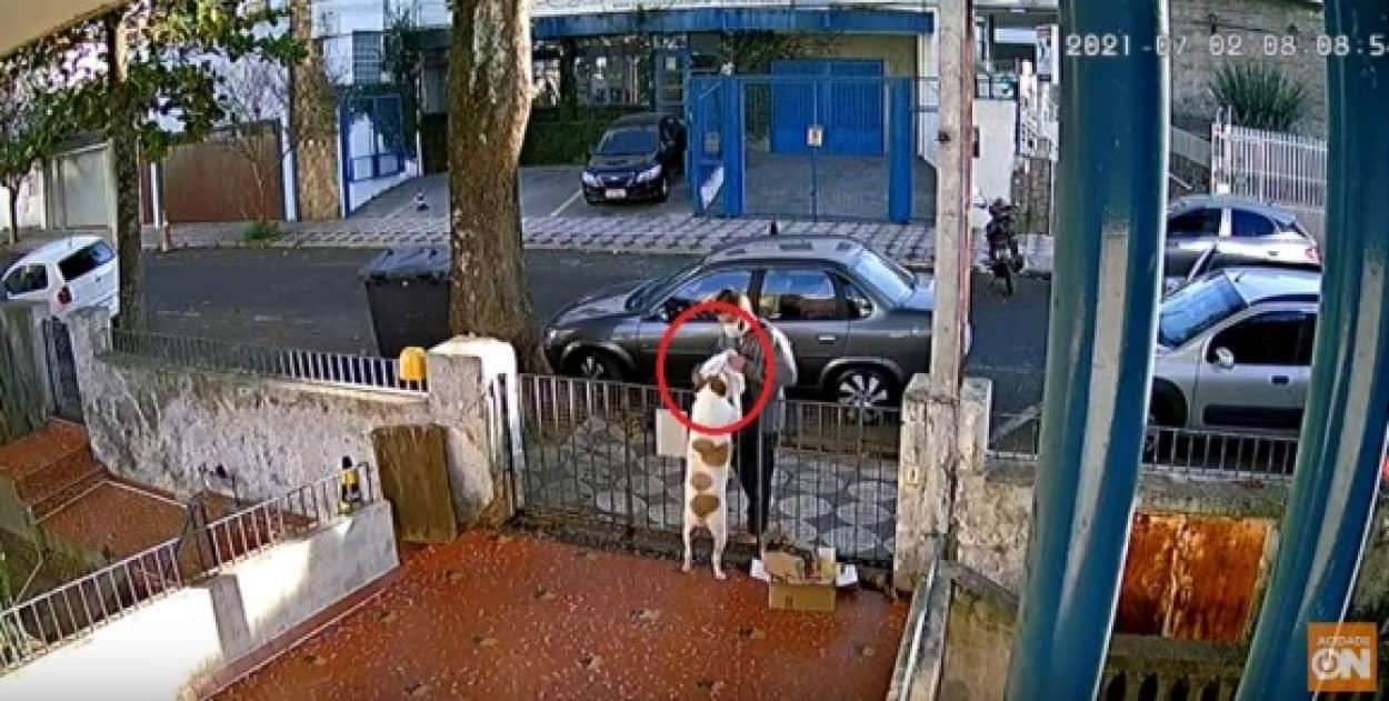 犬の服が盗まれる事件発生。しかしその後、犬に服を買い着せに来た人が