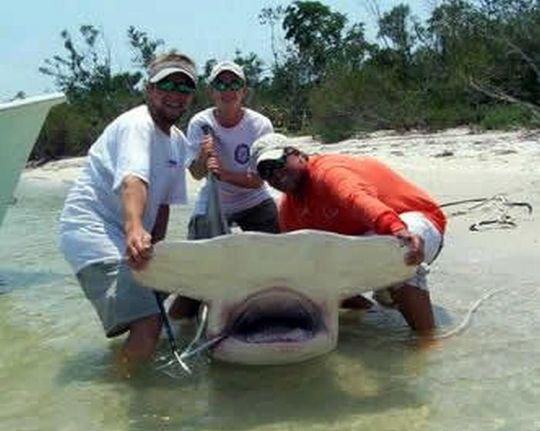 sharks_19