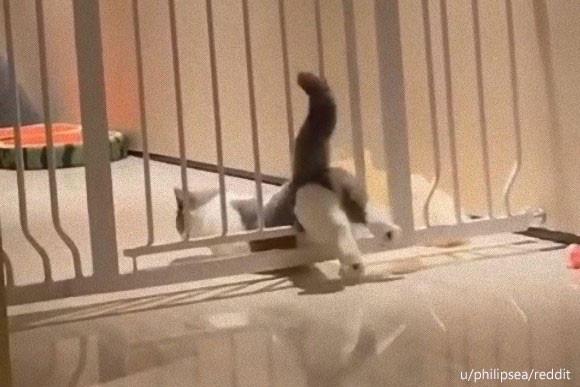 猫、液体流動化失敗。スルリと柵が潜り抜けられなかったケーススタディ