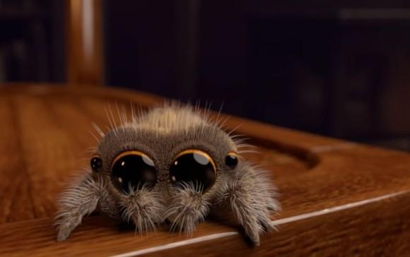 実はクモって調教できる?合図に従ってジャンプするハエトリグモ(英研究)※蜘蛛出演中