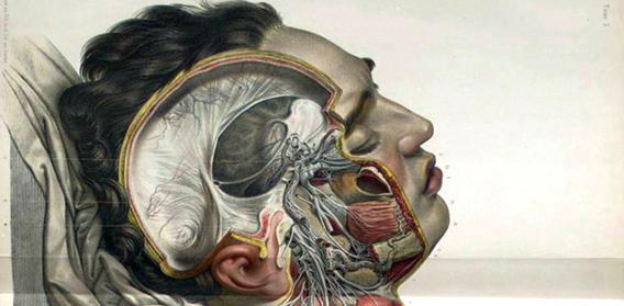 繊細にて芸術的。1600年代から1800年代にかけての人体解剖図