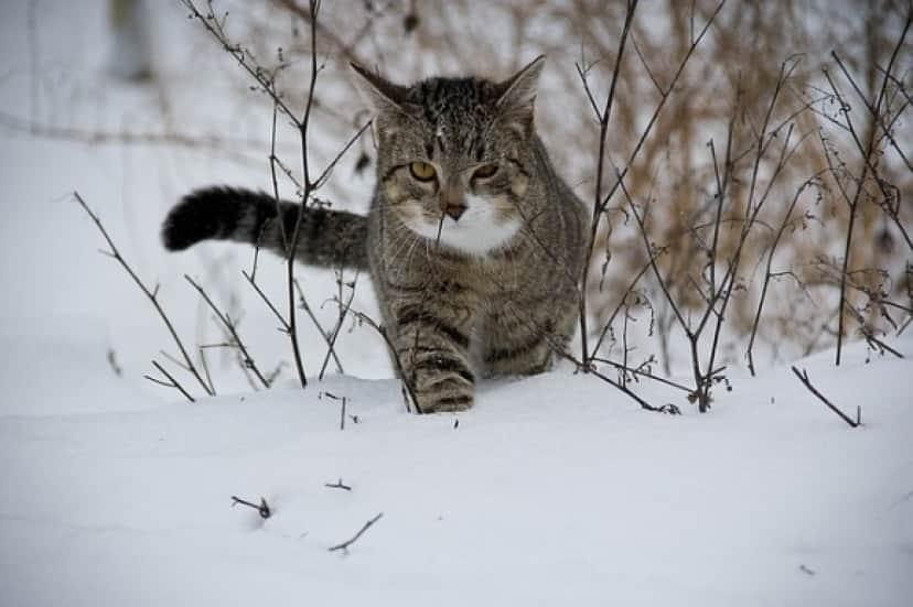 cat-188088_640_e