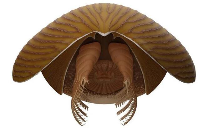 胸熱。カンブリア紀を生きた巨大な古代生物が新たに発見される。アノマロカリスの仲間