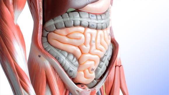 腸は第2の脳。腸に関する10の豆知識