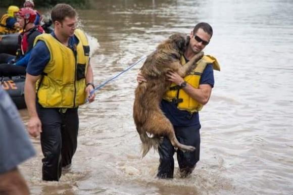 動物たちの命を救え!ハリケーンで被災した動物たちを命がけで助ける人々(米テキサス州)