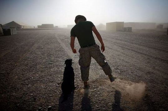 dogs_in_army_07